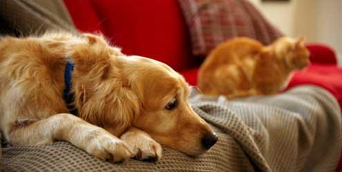 Adotar um cão implica em dar amor, cuidado e atenção (Foto Divulgação: MdeMulher)