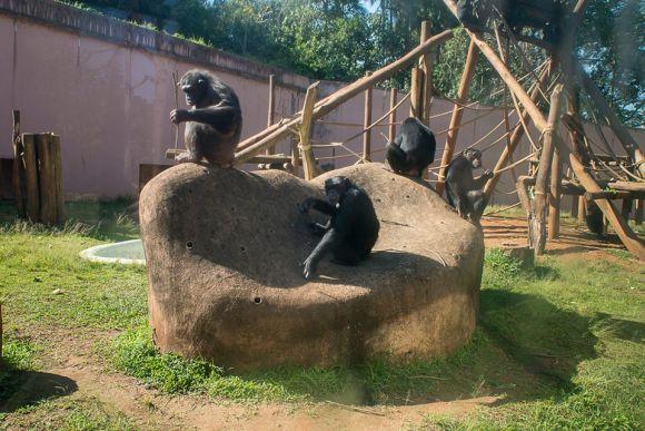São mais de 3 mil animais para você visitar no zoológico da capital paulista (Foto: Divulgação Fundação Parque Zoológico de São Paulo)
