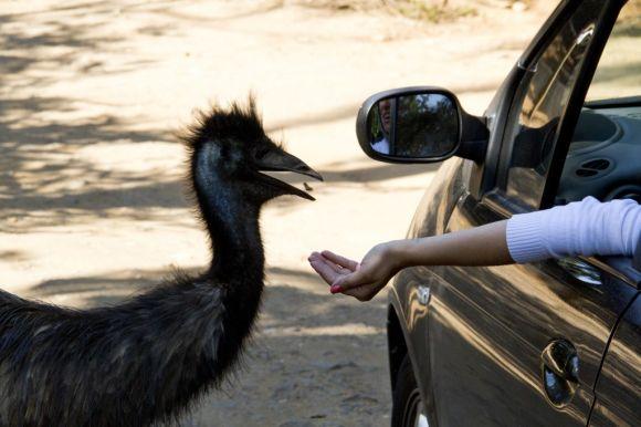 O Zoo Safári é uma atração bastante procurada (Foto: Divulgação Fundação Parque Zoológico de São Paulo)