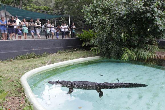 Os répteis chamam a atenção no parque (Foto: Divulgação Fundação Parque Zoológico de São Paulo)