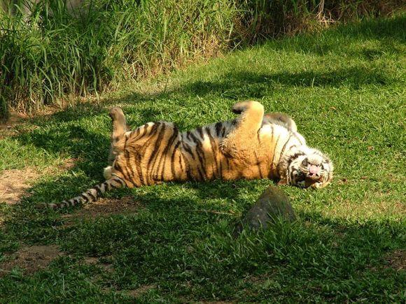 Alguns animais do zoo adoram fazer graça para os visitantes (Foto: Divulgação Fundação Parque Zoológico de São Paulo)