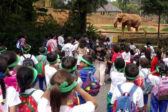 Zoológico de São Paulo - fotos dos animais (Foto: Divulgação Fundação Parque Zoológico de São Paulo)