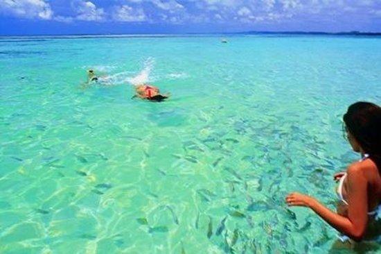 Lugares para visitar no dia dos pais para fazer mergulho (Foto: Divulgação)