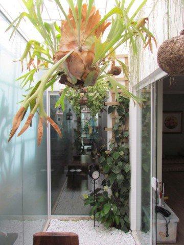 Plantas aéreas são perfeitas para o jardim de inverno (Foto Divulgação: Casa/Abril)