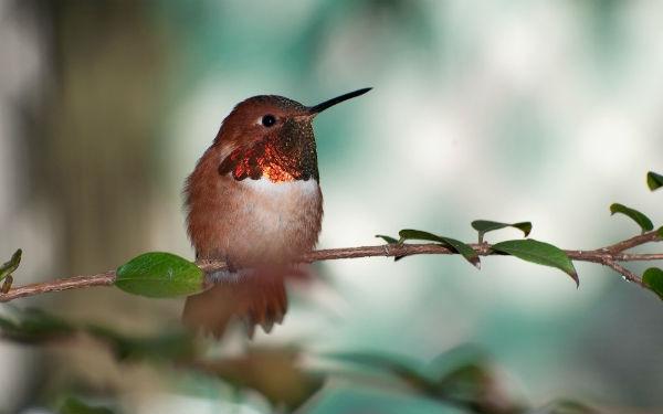 Para criar pássaros de forma legal, é preciso se cadastrar junto ao Ibama (Foto: Divulgação)