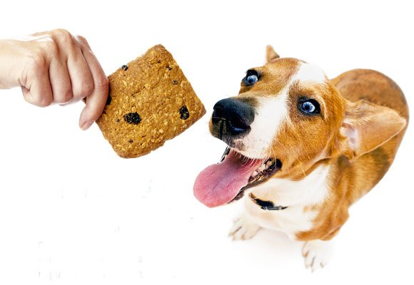 Alimentos proibidos para seu bicho de estimação
