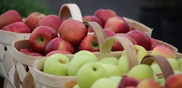 Frutas podem e devem ser consumidas (Foto: Divulgação)