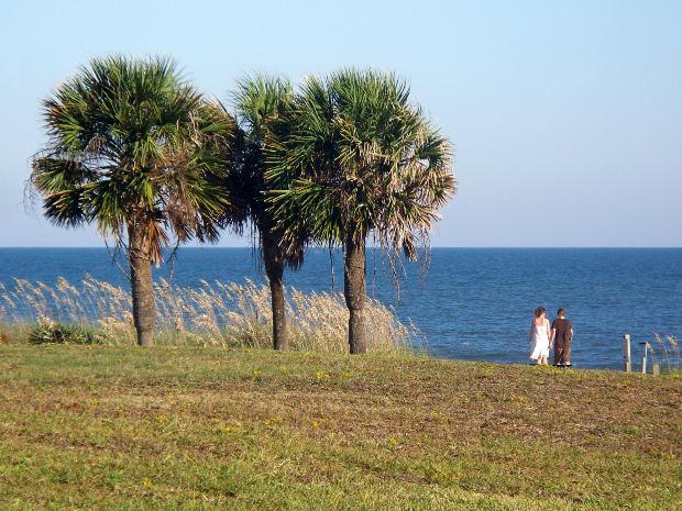 Palmito Fruto da Palmeira (Foto: Divulgação)