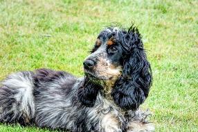 Otite canina sintomas e como tratar