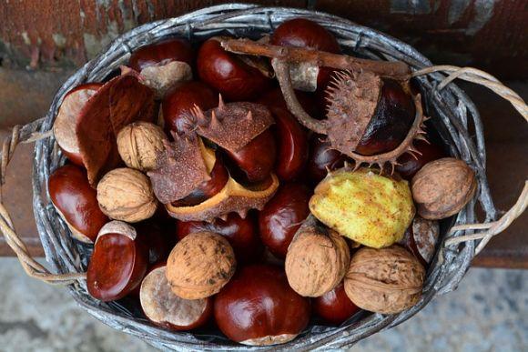 As castanhas trazem vários benefícios para a saúde (Foto Ilustrativa)