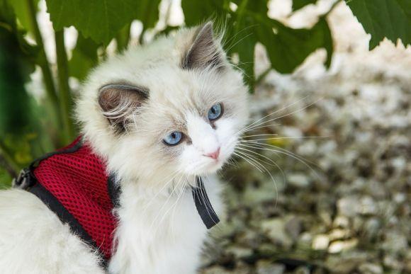 Muitos donos de gatos também adoram enfeitar seus felinos (Foto Ilustrativa)