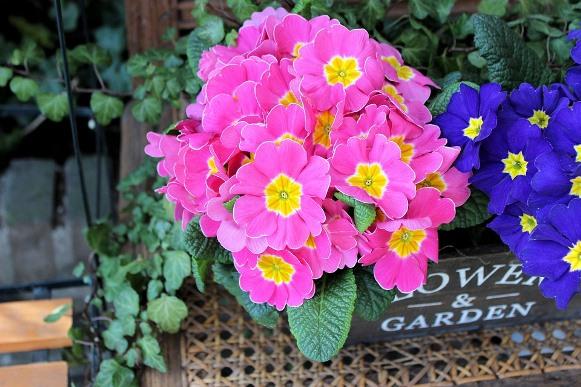 Escolha plantas resistentes para cultivar. (Foto Ilustrativa)