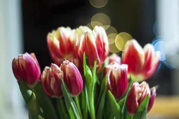 A tulipa combina com o casamento de inverno. (Foto Ilustrativa)