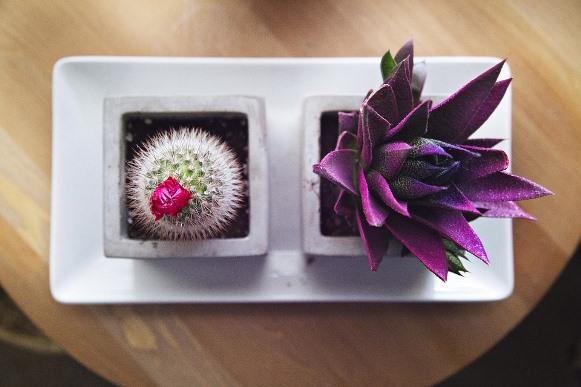 As flores exóticas deixam a decoração com mais personalidade. (Foto Ilustrativa)
