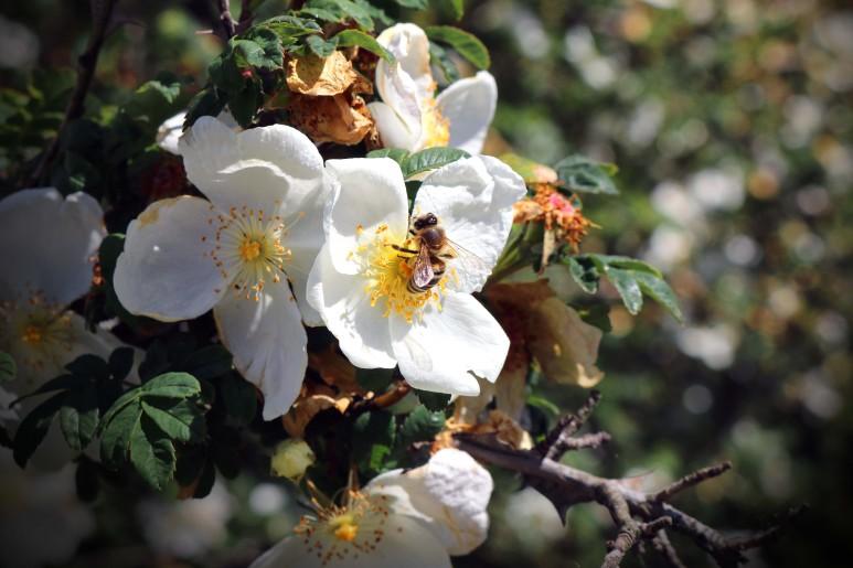 Para quem deseja paz, existem várias flores que representam esse sentimento (Foto: Divulgação)