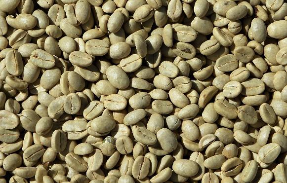 Esse suplemento é feito a base de café verde. (Foto Ilustrativa)