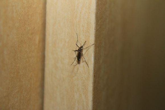 A nova vacina não protege contra as outras doenças transmitidas pelo Aedes aegypt (Foto Ilustrativa)