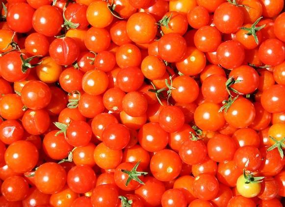 Os tomatinhos representam uma ótima opção de lanche. (Foto Ilustrativa)