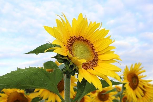 Prepare bem o solo para as flores crescerem bonitas. (Foto Ilustrativa)