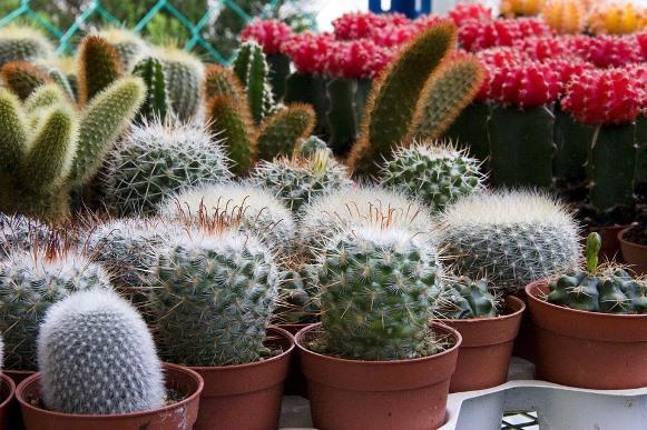 A planta escolhida deve se adaptar às condições do ambiente. (Foto: Divulgação)