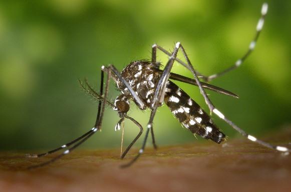 Como se proteger do vírus da Zika. (Foto Ilustrativa)