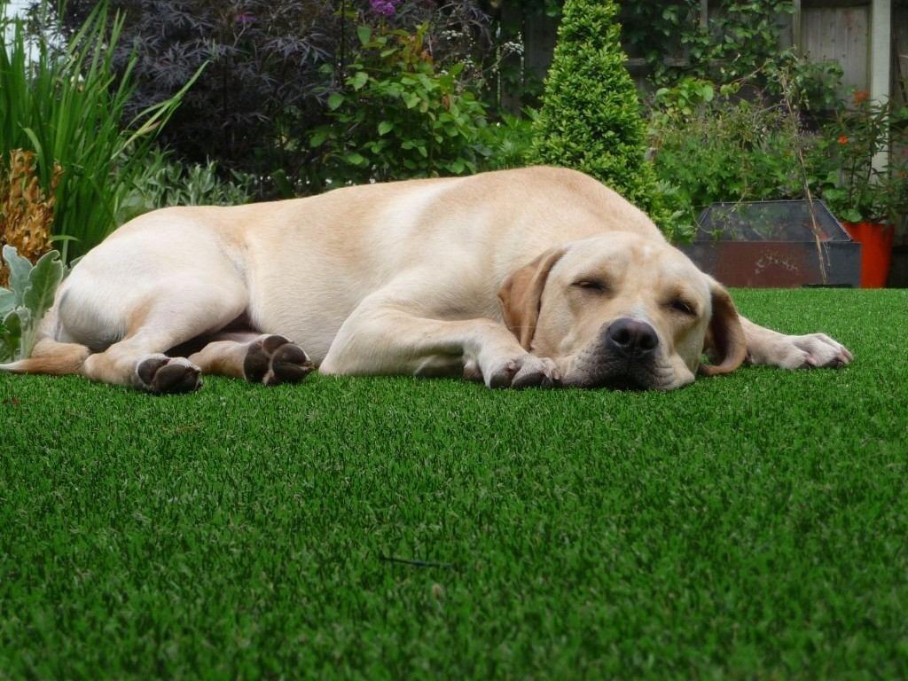 Deixe o jardim externo mais prático com gramado artificial. (Foto  #396221 1024x768