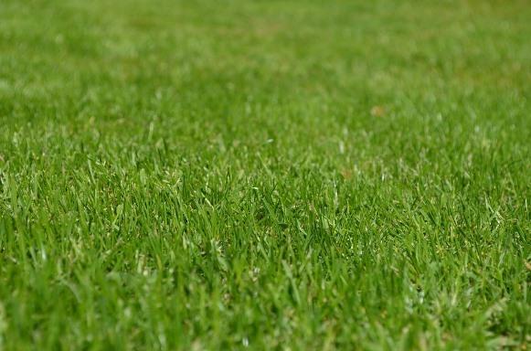 Decoração com grama sintética: dicas e fotos. (Foto Ilustrativa)