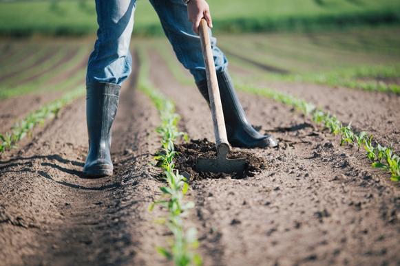 Há vagas para o curso de técnico em agronegócio. (Foto Ilustrativa)