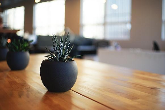 As plantas suculentas resistem aos ambientes fechados. (Foto Ilustrativa)