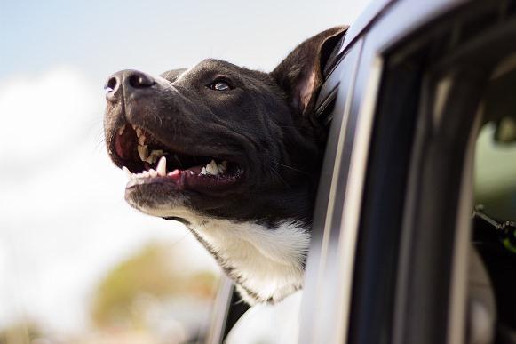 A convivência com um cão alivia o estresse. (Foto Ilustrativa)