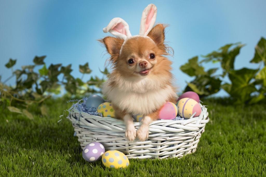 Ovo de Páscoa para cães onde comprar (Foto: Reprodução/Petshopmagazine)