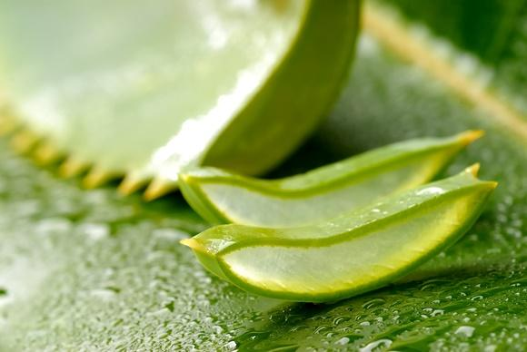 A babosa tem propriedades que fortalecem o cabelo. (Foto Ilustrativa)