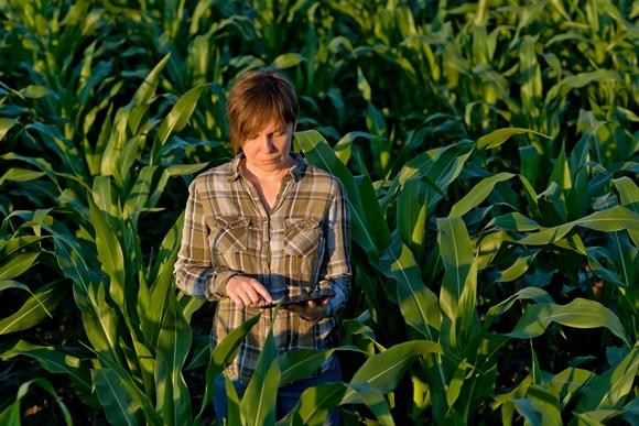O curso de agronomia da USP e da Unicamp são referência. (Foto Ilustrativa)
