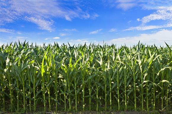 A produção de etanol será intensificada no Piauí. (Foto Ilustrativa)