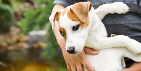 Dá para identificar um cão bem cuidado de longe (Foto: Divulgação)
