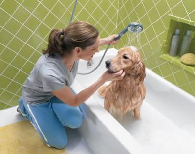 Levar o cachorro periodicamente ao veterinário é essencial (Foto: Divulgação)