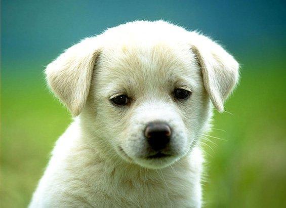 Aprenda a alimentar melhor o seu cão (Foto: Divulgação)