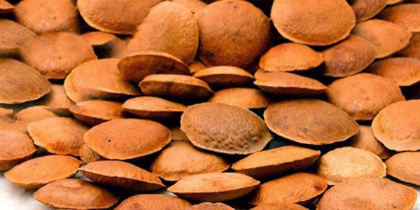 Saiba quais são os benefícios do uso da semente de sucupira (Foto: Reprodução/ Plantas Medicinais e Fitoterapia)