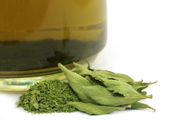 Mastigar as folhas da planta ajuda a tratar doenças estomacais. (Foto Ilustrativa)