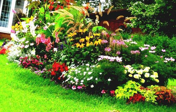 Canteiro com flores coloridas. (Foto: Reprodução/ homelk)