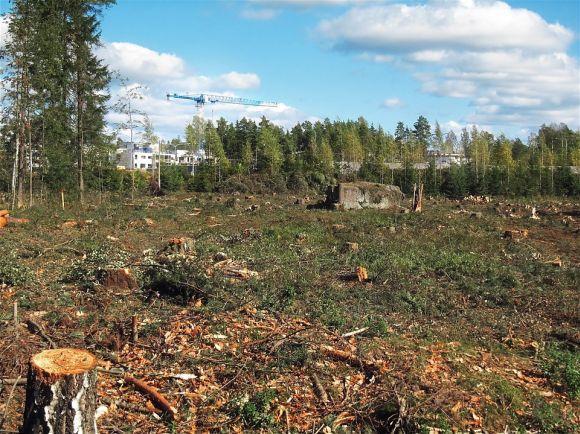 Ele também é fundamental para ajudar na preservação ambiental (Foto Ilustrativa)