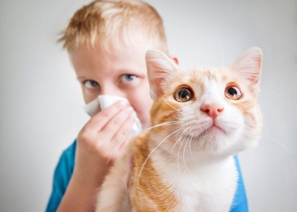 Nem sempre é o pelo do animal que causa alergia. (Foto Ilustrativa)