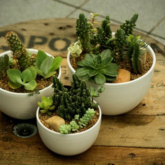 artesanato mini jardim:Como-fazer-um-mini-jardim-para-apartamentos-1-os-mini-mundos.jpg