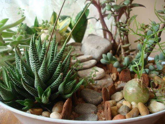 As plantas suculentas são as mais recomendadas. (Foto: Reprodução/Pinterest)