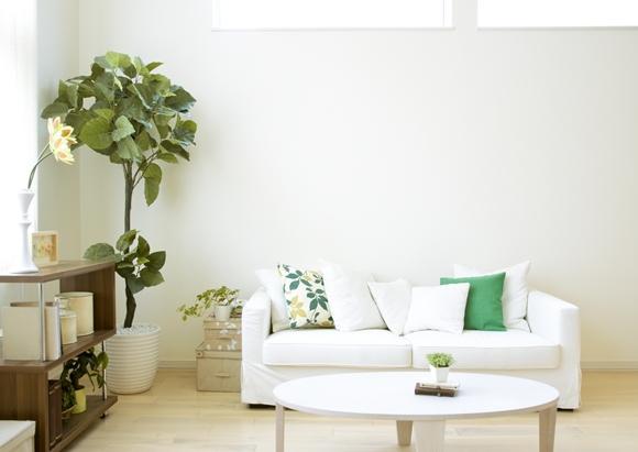 A planta acrescenta um toque de natureza ao ambiente. (Foto Ilustrativa)
