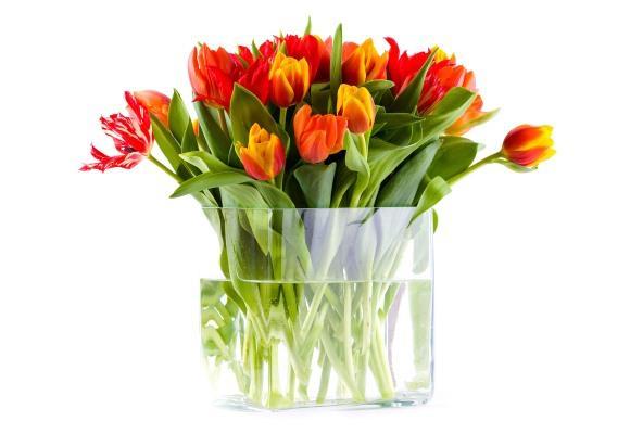 Vasos de plantas para decorar modelos e dicas 12 intdecor