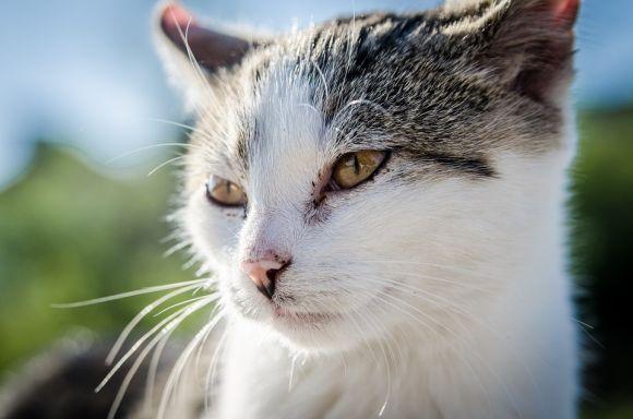 Cuidados e prevenções de doenças em gatos são alguns dos temas dos cursos gratuitos (Foto Ilustrativa)