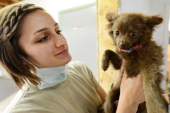 Doenças e tratamentos para cães também são temas de cursos a distância para veterinários (Foto Ilustrativa)