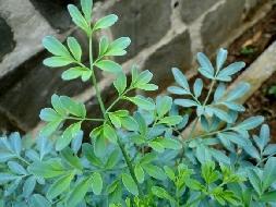 10 plantas para cultivar e melhorar sua casa