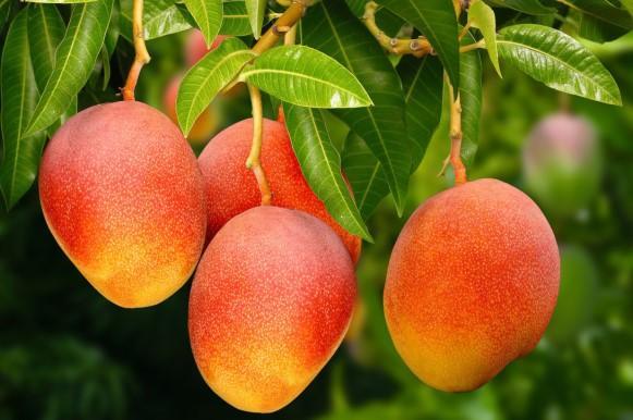 Rica em fibras, a fruta ajuda a regular o intestino. (Foto Ilustrativa)